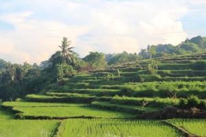 Bali (17 von 27)