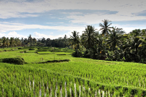 Bali (11 von 37)
