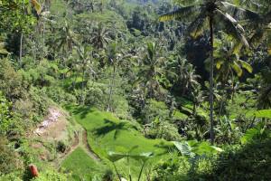 Bali unbearbeitet (19 von 111)