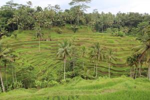 Bali unbearbeitet (84 von 111)