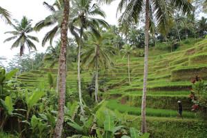Bali unbearbeitet (85 von 111)