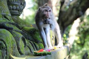 Bali unbearbeitet (89 von 111)